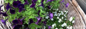Tips: Smålands Trädgårdsmässa
