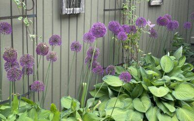 Visning av privat trädgård i Lindsdal